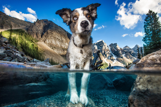 Dog-photography-tips