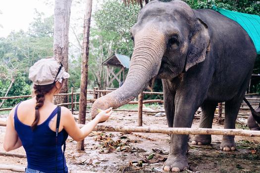 Thailand Snapshot