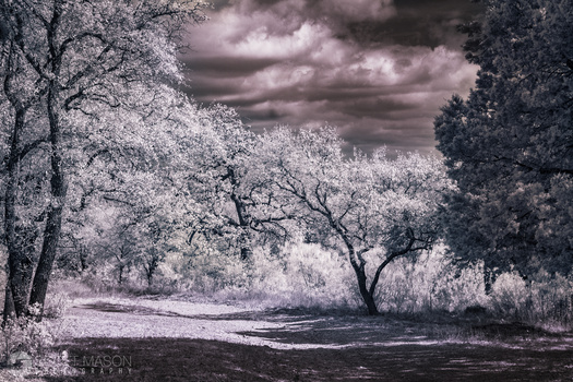 an infrared photo of trees and a sky