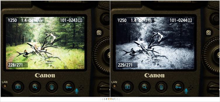 Another example between judging the photo in color or black and white, The preview is limited to the few settings that are available in-camera. With post-processing you can tweak the black and white image a lot more. But this gives a good idea of what to