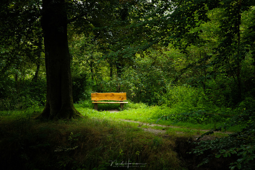 When the photo is changed into a color photo again, you can see how the photo has changed. Now the bench is the thing that gets all the attention. Not only by its color, but it is also brighter than its surroundings.