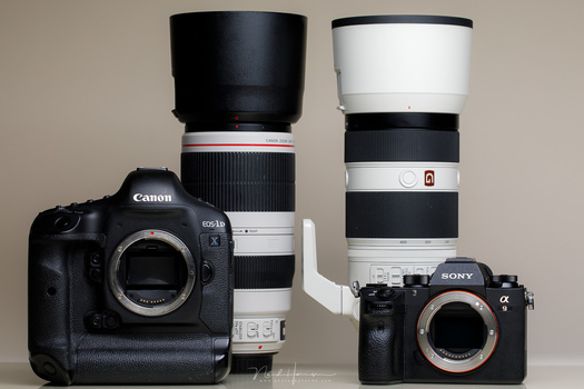 A sports camera and big zoom lens is very usable for wildlife and birds. These two camera's are accompanied by a 100-400mm lens. that are very usable for wildlife and birds. You can even combine these with a tele converter for some extra reach.