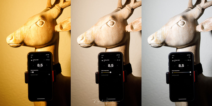 The Profoto C1 Plus has the possibility to change the color temperature of the light, as seen in this example. It can only be changed from the app.