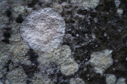 Tamron 35mm f/2.8 lichen