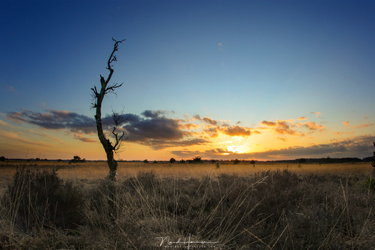 Although the subject, that bare tree, isn't the most interesting one, the image is just for demonstration purposes. This is shot with 15mm on a 1,3crop camera. It shows a small background with lots of blue sky, which isn't that interesting, I think.