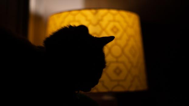 Underexposed pet portrait next to lamp
