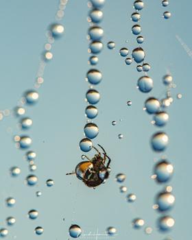 A spider in its web with dew drops reflecting the world (EOS 5Dmk3 + 100mm macro lens | ISO200 | f/6,3 | 1/320)