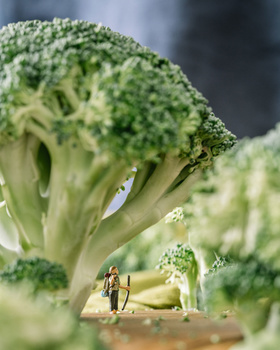 broc forest 1 - How Professional Photographers Are Staying Inventive Throughout Lockdown