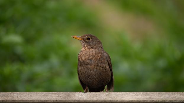 Bird composition framing