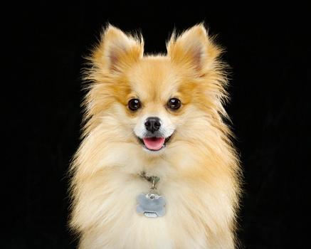 ACDSee Loki Puppy Portrait JTBlenker.com Fstoppers