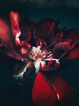 Alia Rose by Walid Azami