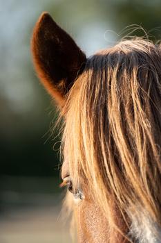 Horse. Tamron 70-180mm f/2.8