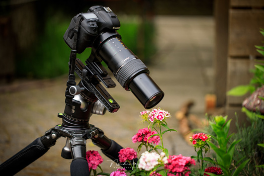 Focussing with live view is very accurate. Perfect for macro photography