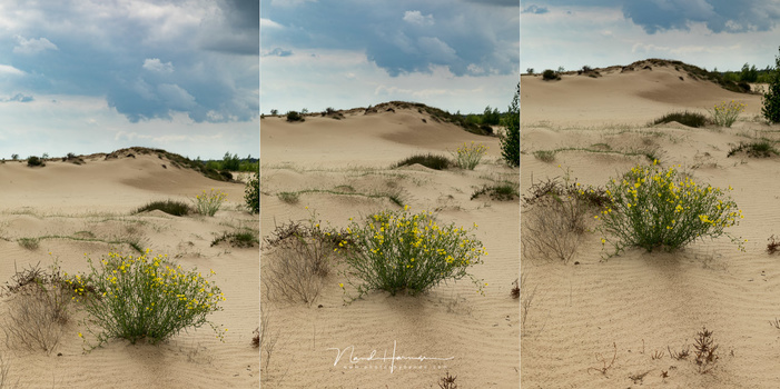 The angle in which you point your camera will change the feeling of the composition. Which one do you like the best?