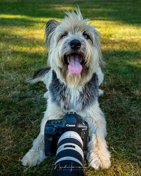 Photographing the dogs in the park with the Canon EOS 1Dx mark III