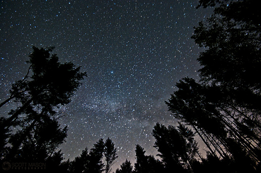 the milky way behind tall trees
