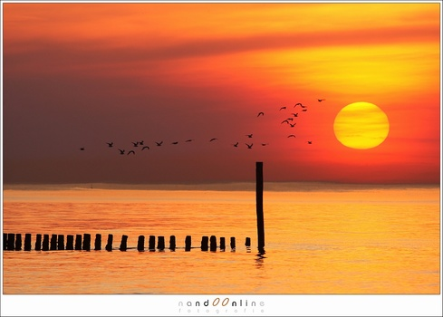Reality or manipulation?  It is an image from the archives. I took this photo back in 2012 with a long telelens. The gulls flew through the frame and I took a series of images. It is amazing how the gulls and sun fit together. Nothing is manipulated. Do y