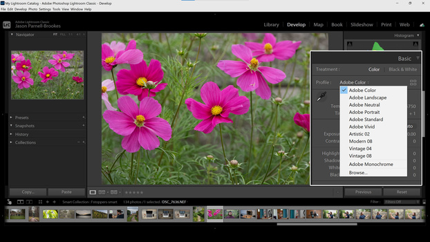 Color Profiles in Lightroom Classic