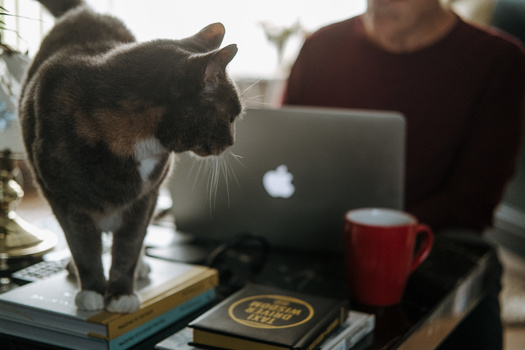 A cat on a table with a man using a laptop.