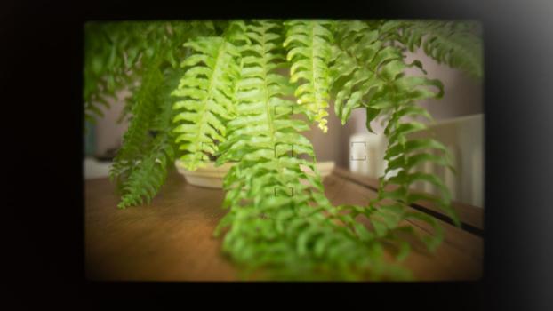 View through film camera viewfinder