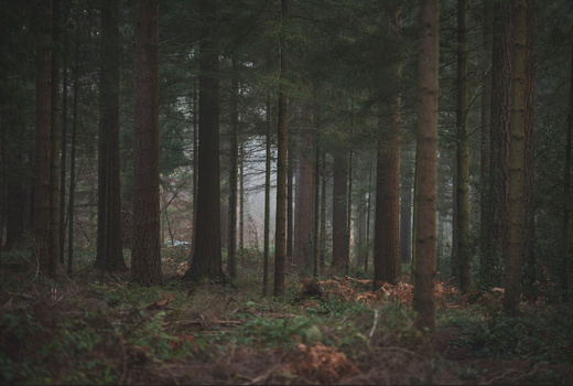 Wide shot of forest scene