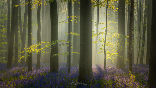 Light in the forest by Matthijs Bettman