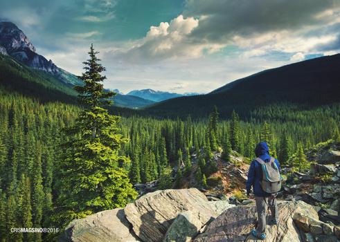 Into the vast wilderness