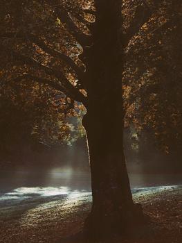 Tree by Kjetil Tofte