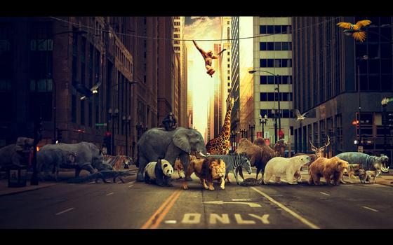Animal migration by dnjimage dnj