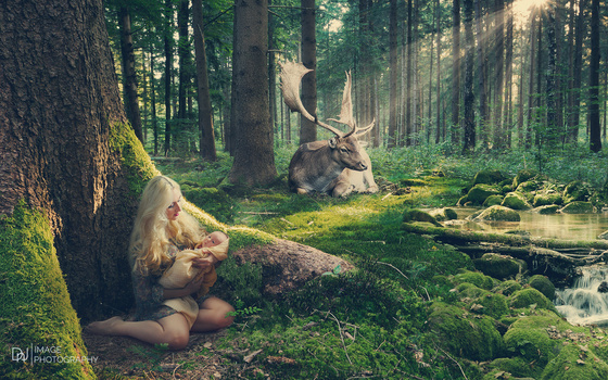 Forest mistery  by dnjimage dnj