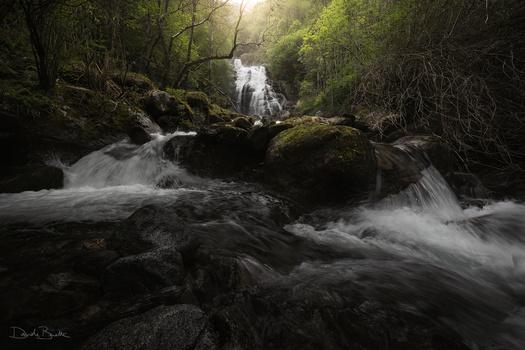 Flow by Davide Beretta