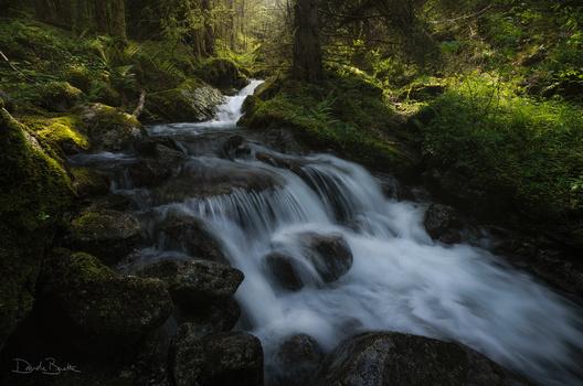 Magical forest by Davide Beretta