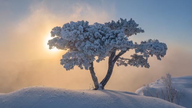 Winter little giant by jaeyoun Ryu