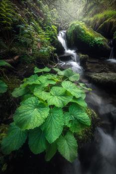 """""""green falls"""" by alfonso maseda varela"""