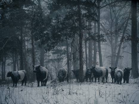 Winter Grazing