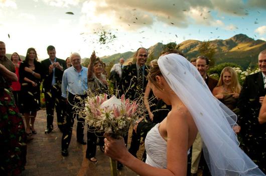 Protea bride