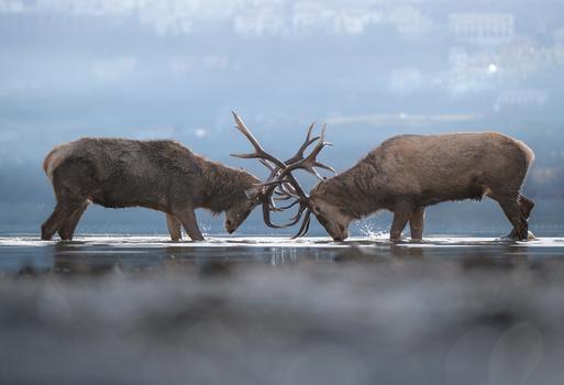 Training Deers by Andrea Laerte Davide