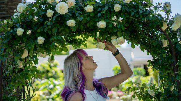 Beauty Under a Rose by Scott kirkbride