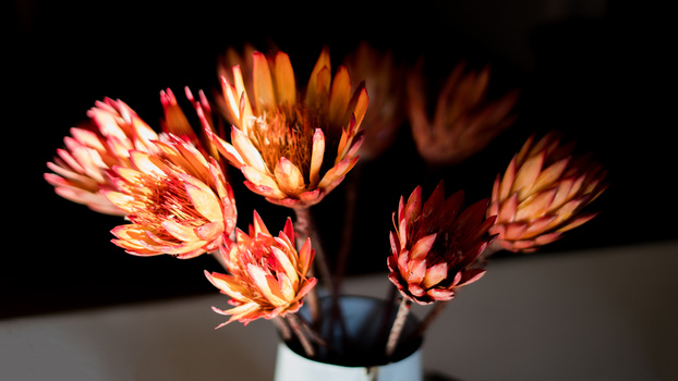 Wild Protea by Scott kirkbride