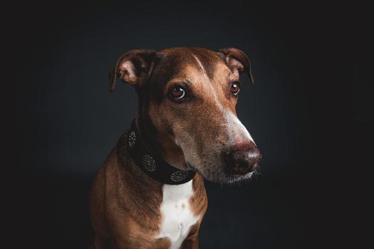 My Doggo by GARY CUMMINS