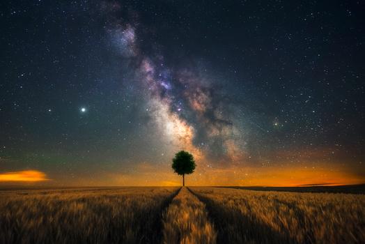 That One Tree by GARY CUMMINS