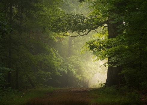 Foggy Woodland by Daniel Frost
