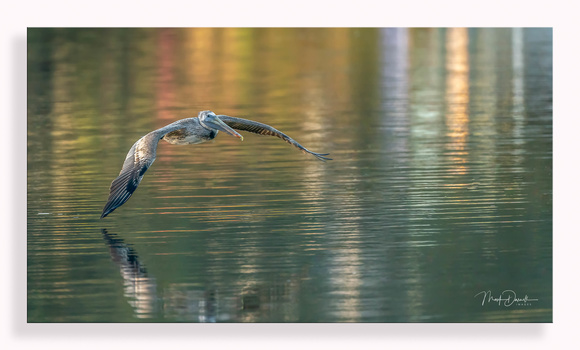 Pelican Runway Lights: by Mark Darnell