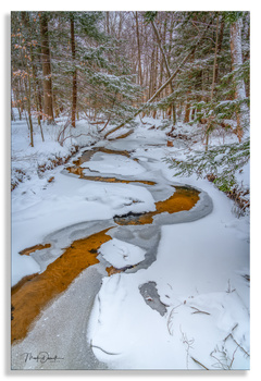 Winter Paints A Picture by Mark Darnell