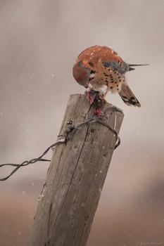 Blood, Snow, and Fur by Jake VanderHoeven