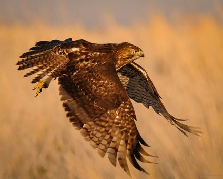 Grass Gliding by Jake VanderHoeven