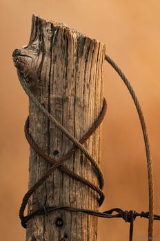 Fence Post by Jake VanderHoeven