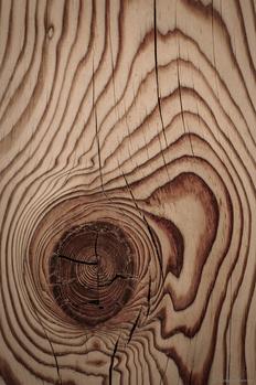 Grain by Jake VanderHoeven