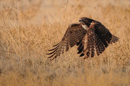 Flight by Jake VanderHoeven