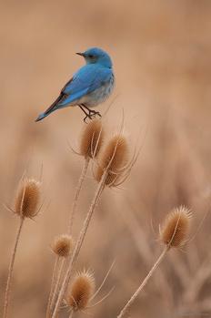 Bluebird by Jake VanderHoeven